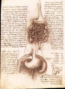 The first illustration of the appendix by da Vinci. Royal Library,Windsor.